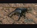 第84位:虫皇帝 カブトクワガタの戦い その3 thumbnail
