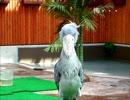 掛川花鳥園 ハシビロコウさんをじっーと見る。