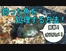 【簡単オススメ】釣った魚を鮮度良く持ち帰る方法をご紹介!