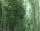 幻想的!! 京都 嵯峨野 竹林の道を歩いてみた