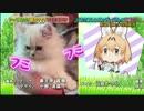 2017/8/25テレビ東京『どうぶつピース』サーバル登場シーンのみ