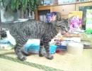 【足の不自由な猫を保護】 病院に行った結果(='x'=)