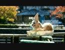 【京都市動物園】今話題のフェネック撮ってきた!
