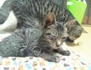 保護した猫の名前決定(='x'=)