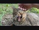 くつろぎ中の野良猫を突然モフりで襲ってみたら超絶愛想で返してきた