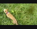 狩猟 猟犬とゆく猪猟 Part56