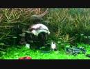 第39位:アクアジオラマ プラモデルを水槽に沈めてみた 2 (つづき thumbnail