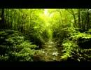 渓流の音とカッコウの鳴き声(睡眠用・作業用BGM)