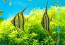 水中の楽園に癒される!武蔵小杉で「グリーンアクアリウム展」が開催