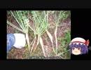 ゆっくり農民65ダイコンを育ててみませんか? thumbnail