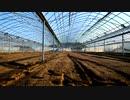 きゅうり栽培実況動画vol.1 始まりました。いや始めてみました。 thumbnail
