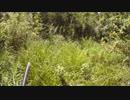 狩猟 猟犬とゆく猪猟 Part57