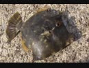 第34位:釣り動画ロマンを求めて 86釣目(花暮岸壁) thumbnail