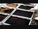 きゅうり栽培実況動画vol.3  きゅうりの種をまく