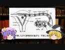 【卵巣・卵管】ゆっくり魔理沙と学ぶ夜の生物学7【ゆっくり解説】