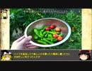 第62位:【小かぶ】バイク乗りが始める 家庭菜園【その1】 thumbnail