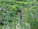 ニコニコ森林観察