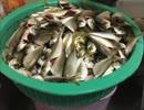 【みっこ】包丁使わない豆アジの簡単下処理方法