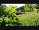 玉置径夫 心癒される草原