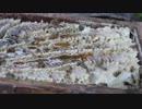 ハチミツの収穫 2017