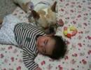 犬が赤ちゃんの腕枕で寝てみる