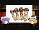 【ペニス】ゆっくり魔理沙と学ぶ夜の生物学9【ゆっくり解説】