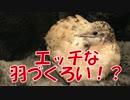 第22位:うずらが羽づくろいするだけの動画 thumbnail