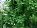 ハイパーレイプ犬-禁断の異種間交配-