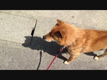 散歩だと思ってたら、注射だとだんだん気付いた時の犬