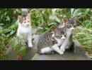 台風通過直後の野良猫家族を訪ねてみた