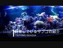第80位:育てているサンゴの紹介 thumbnail