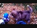 【徳川高人の犬チャンネル】落ち葉に埋もれた犬が走り回る