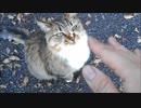 「撫でてー」懇願してくる野良猫を焦らしたらキレられた
