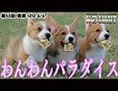 NO LIMIT -ノーリミット- 第212話(4/4)