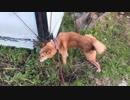 おしっこ長すぎるんじゃね?散歩する犬