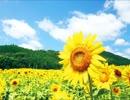 ひまわり 歌:カズン ( NHK教育「ボランティアにっぽん」テーマソング)