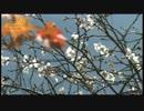 三宅弘一 紅葉のそばに咲く白い花