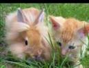 子猫がいっぱい!坂本勝直の癒やしの猫動画集