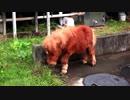 かわいいミニチュアホース♡徳川高人の動物チャンネル