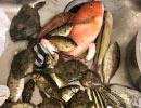 【後援会アーカイブ】大西漁業組合の挑戦!これが本当の堤防五目釣りだ