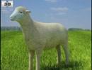深層webで見つけた羊の動画