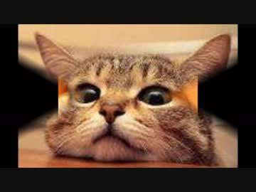 猫 癒し 動画