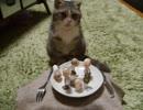 馬鹿な飼い主の遊びに付き合わされてキレ気味な猫その①