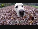 第23位:カバを逆さ 犬、猫・スペシャル thumbnail