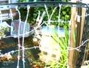 ゴミ置き、有刺鉄線の囲いで門をふさいで鍵をかけられる
