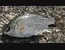 釣り動画ロマンを求めて 123釣目:前半(大磯港)