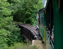 列車の音と鳥の鳴き声(睡眠用BGM・作業用BGM)