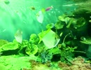 海の魚 ナンヨウハギ・・・・しながわ水族館