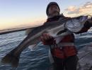 【後援会アーカイブ】エビ撒き&泳がせ釣りで総重量15kg?!奇跡の展開