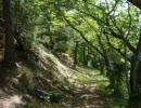 第51位:【作業用BGM】あなたの部屋が森になる 癒しの森林浴【Healing Forest】 thumbnail